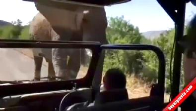 guney afrika - Ünlü oyuncuya fil saldırısı!