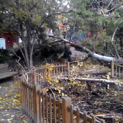 CHP'li Çankaya Belediyesi'nden ağaç katliamı