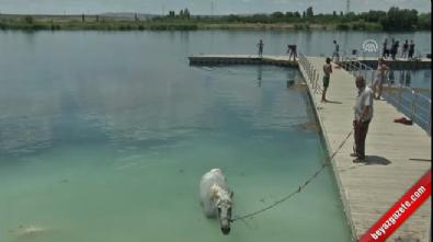 Nehirde hem kendileri hem atları serinledi