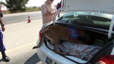 arac plakasi -  Antalya'da otomobilde 350 kilo et ele geçirildi