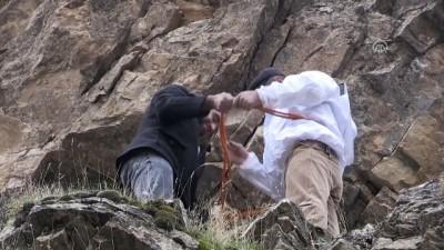'Kaya balı'na ulaşmak için tehlikeyi göze alıyorlar - VAN