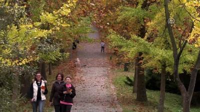 Canlı ağaç müzesinde sonbahar - İSTANBUL
