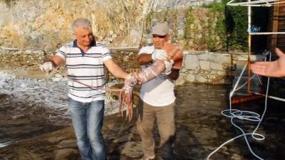 Kuşadası'nda sahile 1 metre 45 santim uzunluğunda ölü kalamar vurdu