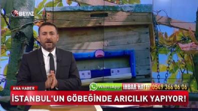 İstanbul'un göbeğinde arıcılık yapıyorlar (Beyaz Tv Özel Haber)