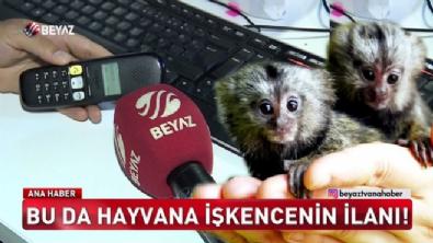 İnternetten maymun satıyorlar