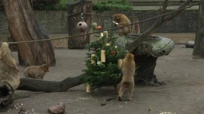 Berlin'de istenmeyen noel ağaçları ile hayvanlara ziyafet