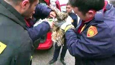Güvenlik teline takılan baykuşu itfaiye kurtardı