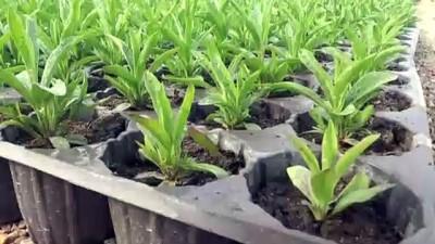 Özenle yetiştirilen çiçekler toprakla buluşacak - VAN
