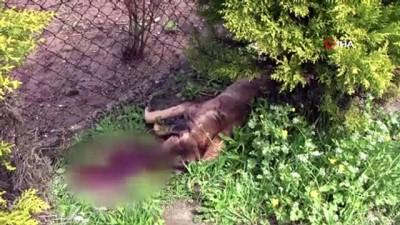 2 köpek tüfekle vurularak öldürüldü