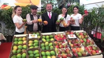Gazipaşa Tarım Fuarında görücüye çıkan mango fidanı yoğun ilgi gördü
