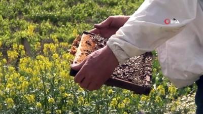 bal arisi -  Manisa'da milyonlarca arı telef oldu