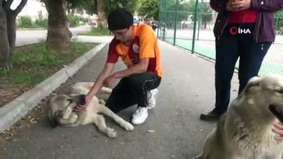 Mersin'de hayvan dostu okul...Bu okulda kediler ve köpekler serbestçe dolaşabiliyor