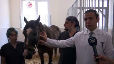 Hasta ve yaralı atları yaşama döndüren merkez - SAMSUN