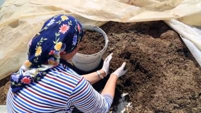 solucan gubresi - Solucan gübresi üretimi kadın girişimcinin geçim kapısı oldu - MUĞLA