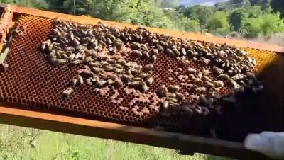 bal arisi - 'Küçük mucize işçiler' tarıma da hizmet ediyor - KOCAELİ