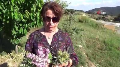 """sifali bitkiler -  Eczacı Özler: """"Kazdağları'ndaki bitkilerin iyileştirici gücü çok yüksek"""""""