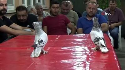 Bu güvercinler açık arttırmayla 30 bin liralık araba fiyatına satılıyor