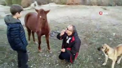 bag kur -  Yabani yılkı atlarını ağzıyla besledi