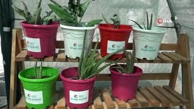olimpiyat oyunlari -  Özel öğrenciler EXPO 2021 için bitki üretimine başladı