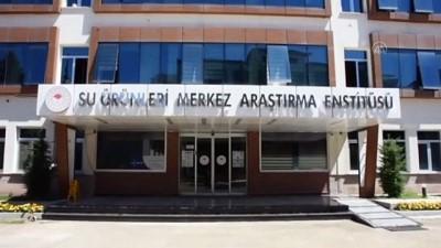 Trabzon SUMAE'da çaça balığı proteini, cips yapımında kullanıldı