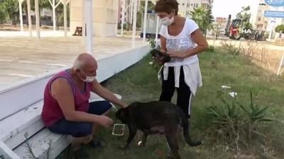 kayali -  Kepçeli yavru köpek kurtarma operasyonu