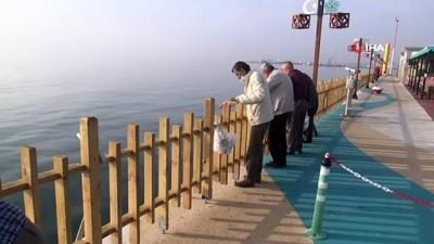 Marmara'da denizanası istilası