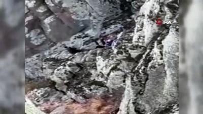 kayali -  5 gündür mahsur kalan keçileri AFAD kurtardı