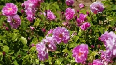 fabrika -  Gül çiçeği için 7.35 TL fiyat belirlenen gül üreticisi dekar başına destek bekliyor