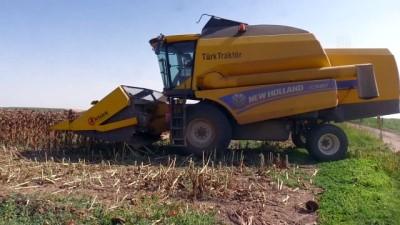 Afyonkarahisar'da üretilen ayçiçeği tohumu yurt dışı pazarına da sunuluyor