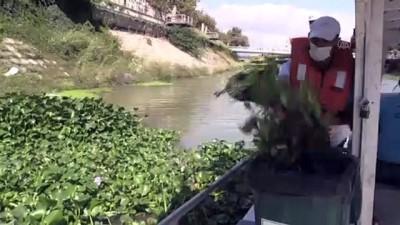 habitat - Asi Nehri üzerindeki su sümbüllerine bariyerli çözüm - HATAY