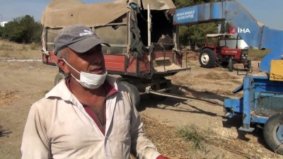 Emekli turizmci, yakılan susam saplarını samana çevirip ekonomiye kazandırdı