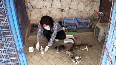 saglik taramasi -  Kuşadası Hayvan Rehabilitasyon Merkezi'nde 18 ayda 3115 hayvan misafir edildi