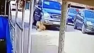 Göz göre göre cipi ile köpeğin üzerinden böyle geçti