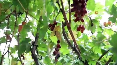 Gencellili kadınların doğal ürünleri Halk Ege Et'te satılacak