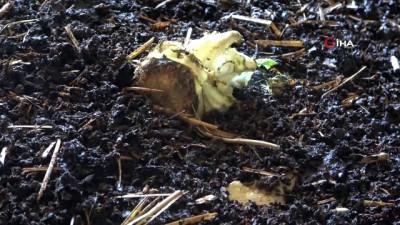 solucan gubresi -  Solucanlara gözü gibi bakıyor