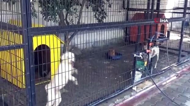 komedyen -  Yazlıkçıların sokağa terk ettikleri hayvanlara belediye sahip çıktı