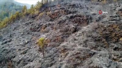 Mersin'deki orman yangını devam ediyor