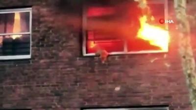 - New York'ta alevlerin arasında kalan kedi camdan atlayarak kurtuldu