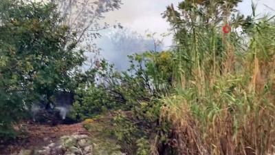 Samandağ'daki yangında arı kovanları kül oldu