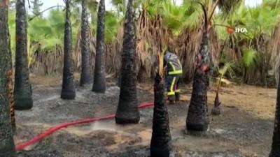 palmiye agaci -  Antalya'da korkutan palmiye yangını