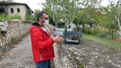 ceviz agaci -  Otomobilin çarptığı sincap tedavi edilerek yeniden doğaya salındı
