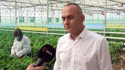 diyalog -  Türk mühendislerden yerli tohum hamlesi
