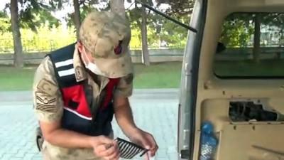 Narkotik köpeği 'Safir' görevinin ilk yılında jandarmanın gururu oldu - KAHRAMANMARAŞ