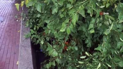 Kocaeli'de taşan derenin sürüklediği otomobil ağaçta asılı kaldı