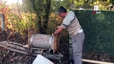 Çürümüş ağaç gövdesini arı kovanına çevirdiler