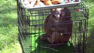 Fatma Şahin'e maymun şoku