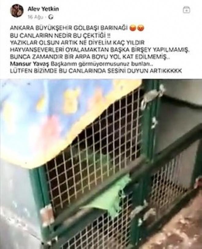 golbasi - Hayvanseverler Ankara Büyükşehir Belediyesine ve Mansur Yavaş'a isyan ediyor