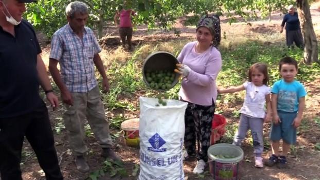 orman vasfini yitirmis arazi - Oğuzlar cevizi yoğun talep görüyor - ÇORUM