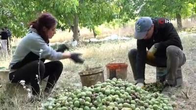 2008 yili -  Bitlis çiftçisi bu yıl cevizden 150 Milyon TL kazanacak