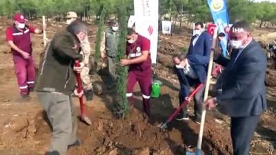 Suriye sınırında 300 bin fidan dikiliyor